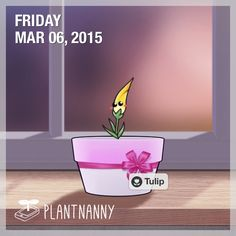 Say hello to my plant! It has absorbed 6,000 ml of water. Get yourself a plant at http://fourdesire.com/outer_link?url=http://itunes.apple.com/app/id590216134&l=en_GB&m=54FA253E