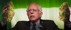 Senator Sanders and the Democrats have criticized the DEA decision on marijuana…