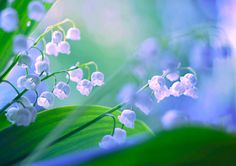 "blooms-and-shrooms: "" konwalie by BaxiaArt """