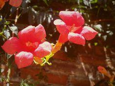 """""""São duas flores unidas São duas rosas nascidas Talvez do mesmo arrebol, Vivendo,no mesmo galho, Da mesma gota de orvalho, Do mesmo raio de sol."""" Castro Alves"""