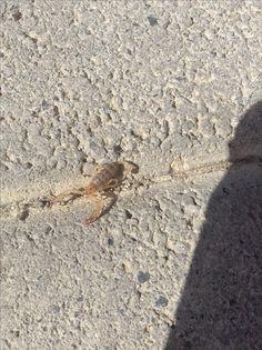 Bébé scorpion 🦂