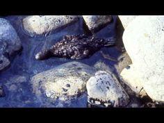ITÄMEREN PUOLESTA - WWF Suomi - Öljyntorjuntajoukot - YouTube