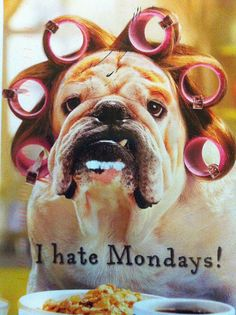I hate Mondays! Funny card of a dog in rollers eating breakfast.  I also hated Mondays at my last job.  Sent by a Postcrosser in Finland.