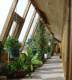 Earthship Greenhouse | ... , including the wall to ceiling tomatoes in an Earthship greenhouse
