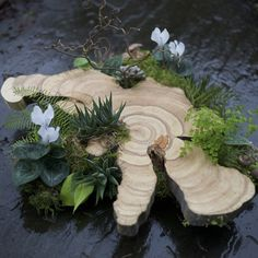 Woodland Centerpiece with a large wood slab from a Juniper tree, contorted… Water Garden, Garden Plants, Indoor Plants, Enchanted Garden Wedding, Minimalist Garden, Porches, Arte Floral, Cacti And Succulents, Ikebana