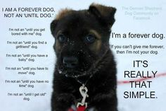 I am a Forever Dog, Not an 'Until Dog' - This poster was traveling all over the internet (still is) Posted by my friends at Pryor's Planet - Jennifer Pryor puts her heart and soul into rescuing animals from bad situations.  www.pryorsplanet.com