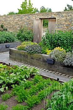 Contemporary walled kitchen garden with raised beds