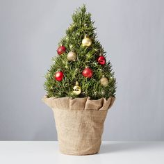 Rosemary Christmas Tree, Rosemary Plant, Gold Ornaments, Tropical Flowers, Plant Care, Houseplants, Indoor Plants, Burlap, Jute