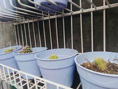Little cactus #pot #cactus