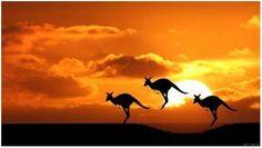 Droomreis voor het gehele gezin: met de camper door Australië - Moeders