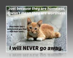 Trap-Neuter-Return (TNR) Learn It. Know It. Do It. It Works. Thank You For Caring.