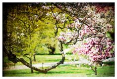 Landscape Photograph spring tree blossoms by moonlightphotography, $30.00