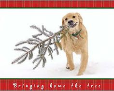 Image result for dog christmas cards