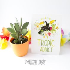 carte postale toucans tropical Midi 10 happy paille