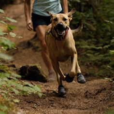 If your dog loves exploring the great outdoors with you, they definitely need Grip Trex boots to protect their tender feet. Grip Trex dog boots set the standard in paw protection for dogs who hike, ru
