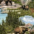 Anti-Pill Fleece Fabric 58\u0027\u0027-Bear Mountain Wilderness,