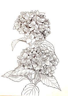 Malowanie na jedwabiu Flower Line Drawings, Simple Line Drawings, Flower Sketches, Outline Drawings, Art Drawings, Drawing Flowers, Art Floral, Floral Drawing, Botanical Drawings