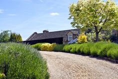 Gravel driveway to a country house with lavender border Gravel Driveway, Driveway Landscaping, Natural Landscaping, Landscaping With Rocks, Landscaping Ideas, Flower Bed Designs, Driveway Design, Lawn Edging