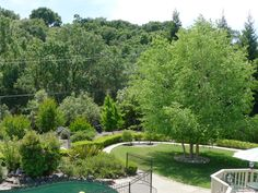 Many Faces of the Birch Tree Betula Nigra, Drought Tolerant Garden, Many Faces, Picnic Area, Birch, Lawn, Garden Design, Golf Courses, Sidewalk