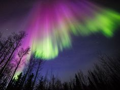 Learn to Skywatch ‏- Purple and Green Aurora Borealis Delta Junction, Alaska Captured on April 2015 Image: Sebastian Saarloos Aurora Borealis, Funny Dog Images, Delta Junction, Saarloos, Funny Animal Memes, Natural Phenomena, Go Green, Night Skies, A Team