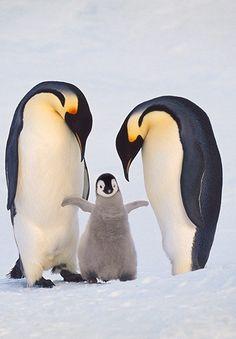 Emperor Penguin Family by Frans Lanting.