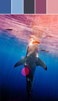 Electric Shark Designed By Lisa Perrone   Stylyze Creative Director via Stylyze