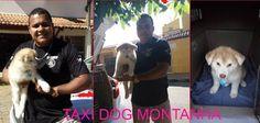 TAXI DOG MONTANHA TRANSPORTE DE ANIMAIS NO RIO DE JANEIRO: MURIAÉ-MG para IPATINGA-MG