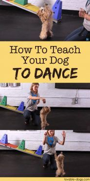 In this video, professional dog trainer Katrina Krings discusses how to teach your dog the trick of dance. This activity requires a clicker to mark when your dog has done something right and several treats to reward their accomplishments.