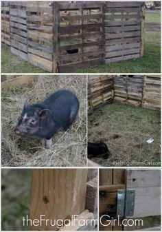 If you need to keep your pig secured outside try making a pig pen using pallets. This way it won't cost you much and you can use what you already have.