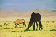 Gondwana Collection: Celebrating a century of wild horses