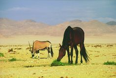 Gondwana Collection: Celebrating a century of wild horses