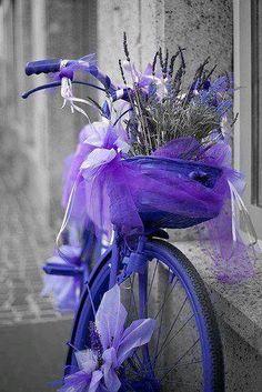 lavender bicycle