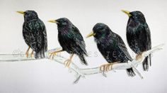 'Starlings' Hand & Machine Embroidered Art Canvas ©gillianbates 2016