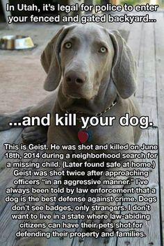www.facebook.com/JusticeForGeist  Instagram @JusticeForGeistUtah  Twitter @JusticeforGeist www.pinterest.com/JusticeforGeist Tag everything #justiceforgeist