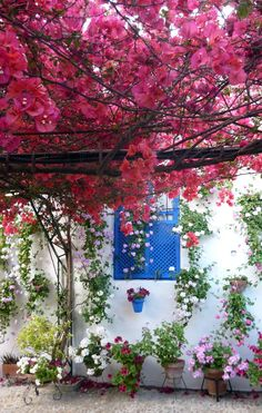 Welcome Spring- This beautiful bougainvillea provides shade in this outdoor area Beautiful Gardens, Beautiful Flowers, Beautiful Places, Terrasse Design, Spanish Garden, Cordoba Spain, Deco Floral, Welcome Spring, Dream Garden