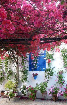 Los patios de #Córdoba en #primavera nos dejan sin palabras #viajes #Andalucía #España #Spain #flores