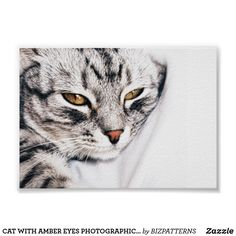 CAT WITH AMBER EYES PHOTOGRAPHIC POSTER Cat Calendar, Calendar 2020, Why Do Cats Purr, Cat Brain, Amber Eyes, Nature Posters, Siamese Cats, Ragdoll Cats, Cat Photography