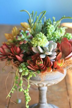 Succulents in urn, would make a nice centerpiece too, I would scatter a few different sizes around the patio