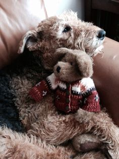 Airedale Love...Love this photo.