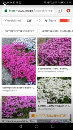 Sammalleimu Planting Flowers, Plants, Flowers