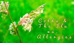 Colds & The Flu vs. Allergies