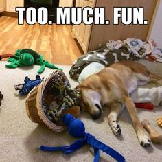 #dog #funny #moment #fun #puppy