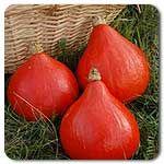 Organic Red Kuri Winter Squash