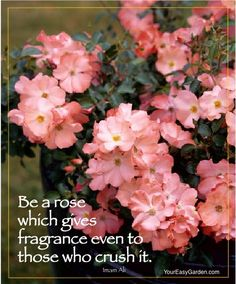 """""""Be a rose which gives fragrance even to those who crush it."""" featuring Flower Carpet Coral"""