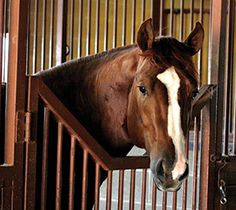 Did you know that hay changes can cause a 10X increase in colic risk for your horse? Recent research has shown there may be things you're accidentally doing (or not doing) that are proven to increase your horse's risk. Read more to see if your horse could benefit from additional support.