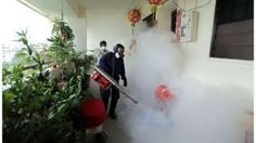 Image copyright                  AFP Image caption                                      Fogging is being carried out across the city-state                                Singapore is advising all pregnant women with symptoms associated with Zika, to be tested for the virus. The city-state has now confirmed 82 locally transmitted cases of Zika, a mosquito-borne virus linked to severe birth defects. It has initiated a drive to wipe out mosquito