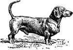 A dachshund and many more dog illustrations 4 free!