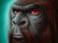 unidentified hominid reputed to lurk in the Australian wilderness. An Australian cryptid similar to the Himalayan Yeti and the North American Bigfoot. The origins of the yowie may lie in a mythological character in native Australian Aboriginal fo Mythological Characters, Mythological Creatures, Fantasy Creatures, Mythical Creatures, Bigfoot Sasquatch, Yeti Bigfoot, Strange Beasts, Native Australians, Legends And Myths