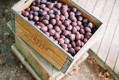 plums by oakmoss, via Flickr