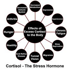 All You Need to Know About Cortisol and Its Health Effects